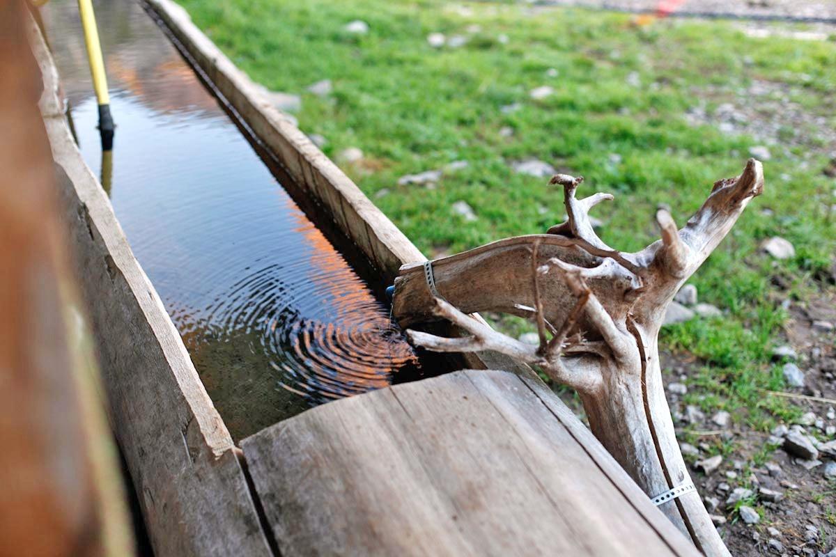 Brunnenwasser zum Aufwachen