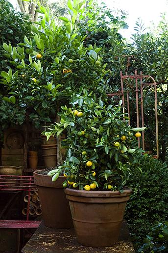 Balkonpflanzen berwintern wohnen - Winter flowers for balcony ...