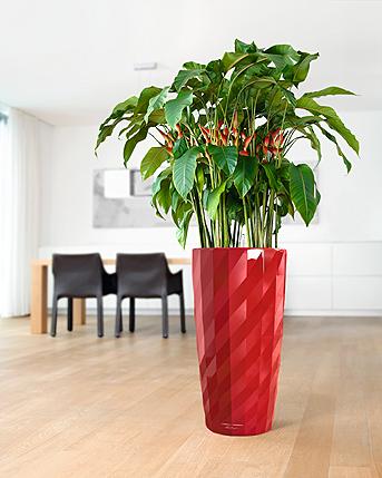 Beste Schlafzimmer Pflanze: Raumklima Verbessern Mit Diesen ... Pflanzen Nach Feng Shui Energie Haus