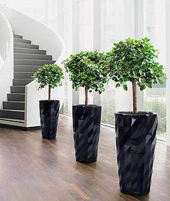Pflanzen vermindern schadstoffe wohnen - Pflanzen schlafzimmer feng shui ...