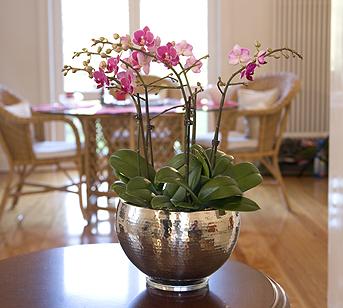 orchideen wohnen. Black Bedroom Furniture Sets. Home Design Ideas