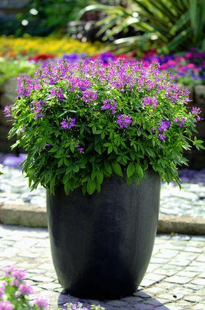 Plantes tendances 2015 wohnen for Plantes pour terrasse ensoleillee