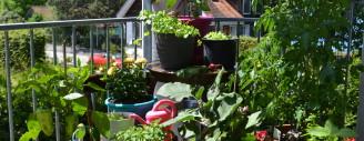 Gemüse im Topf