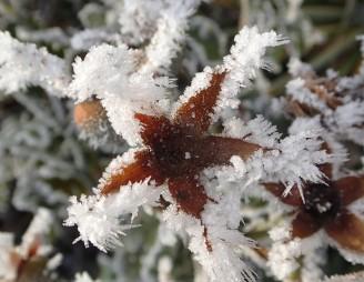 Bald kommt der Winter. Höchste Zeit, Garten- und Kübelpflanzen darauf vorzubereiten. Bild © www.hauenstein-rafz.ch