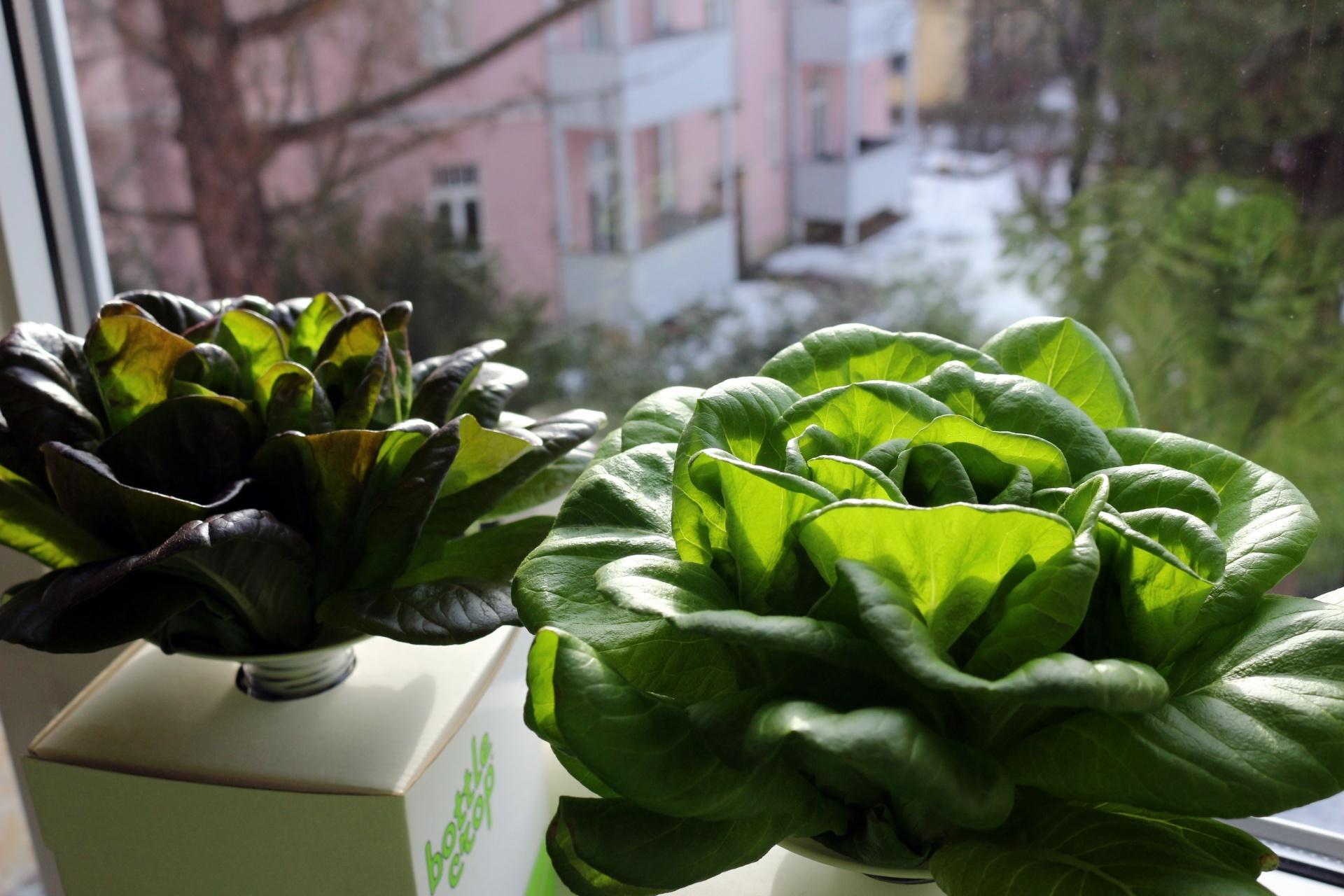 salate aus der flasche praktisch und kologisch. Black Bedroom Furniture Sets. Home Design Ideas